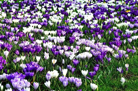 fiori primaverili sfondo fiori primaverili 28 images quadro da su