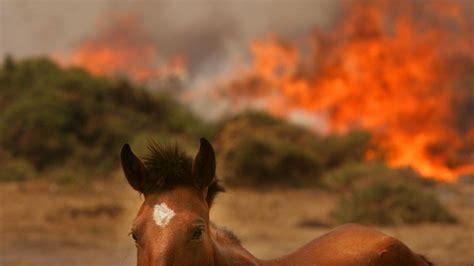 tren gustavo rivas el fuego y los caballos