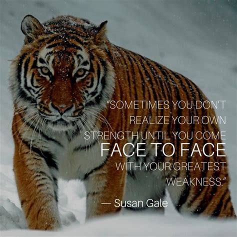 tiger quotes tiger quotes inspirational quotes of the day tiger