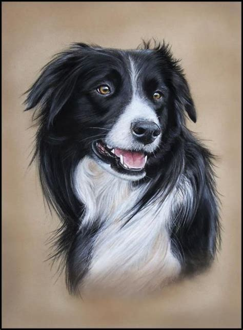 Border Collie Also Search For Border Collie Artwork Search Things I Pinter