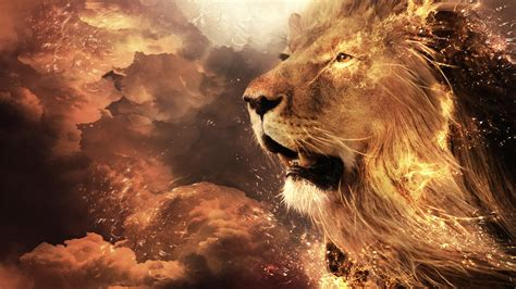 full hd wallpapers 1920x1080 lion lion full hd wallpaper and background image 1920x1080