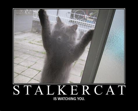 Funny Stalker Memes - de motivationalist stalker cat