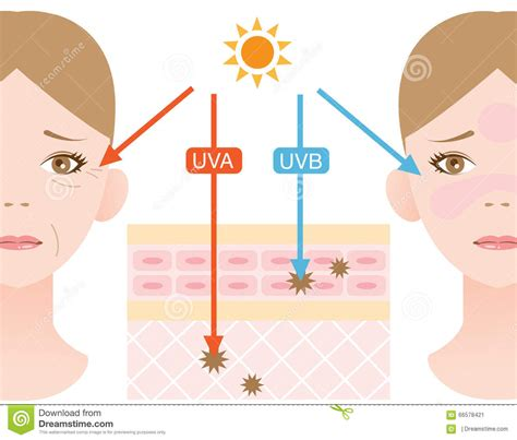 Uv B L For Vitamin D by Ultraviolet Rays Stock Photo Image 66578421