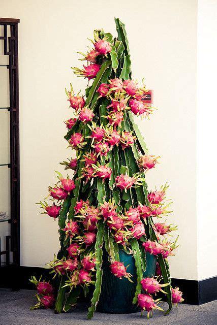 Unique Kaktus fruit as house plant by n0r via flickr unique k 252 belpflanzen kaktus und