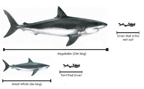 megalodon shark size does prehistoric moby dick sperm whale dethrone the