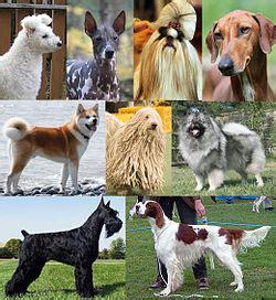 canis lupus familiaris wikipedia la enciclopedia libre