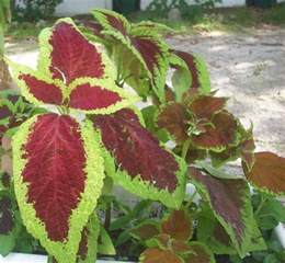 Outside Plants S Garden House Plant Or Outdoor Plant