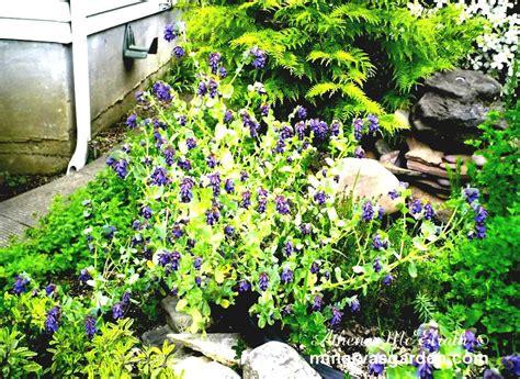 sun garden ideas colorful flower garden ideas sun with green grass