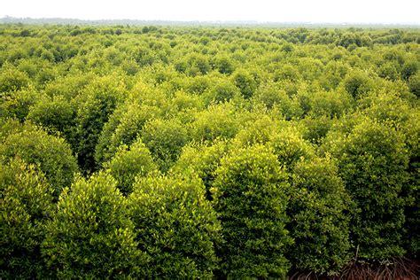 Pakan Udang Lestari tidak hanya pulihkan mangrove kelompok tani dan nelayan