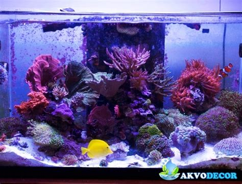Lu Aquarium Air Laut jenis jenis aquarium air laut