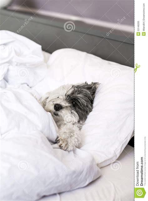 dog sleeping on bed is a dog sleeping in bed with you okay dog beds and