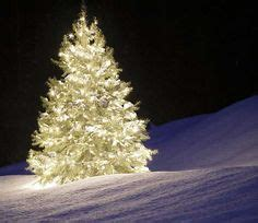 large outdoor christmas tree displays in mn 1000 images about decoration and lights outdoors on minnesota parks and animated