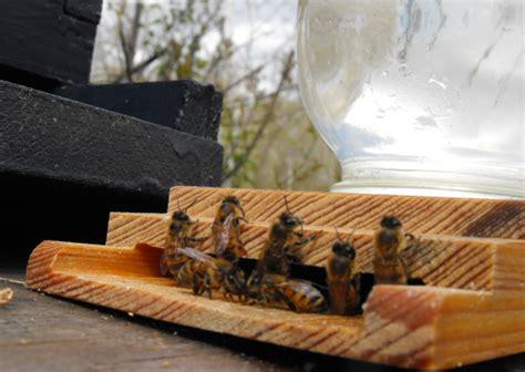 Bee Feeder Feeding The Bees