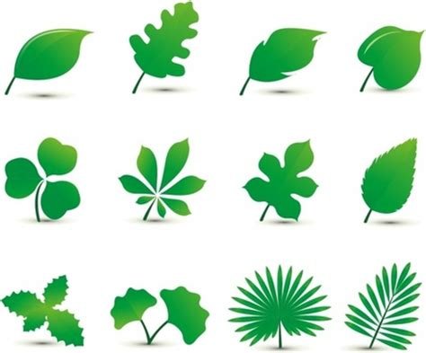 Leave Set leaf free vector 3 719 free vector for