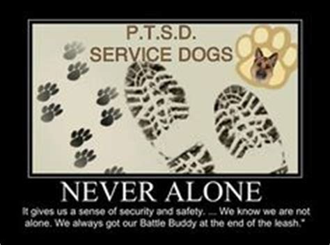 therapy dogs for ptsd service dogs for ptsd warriors on service dogs ptsd and soldiers
