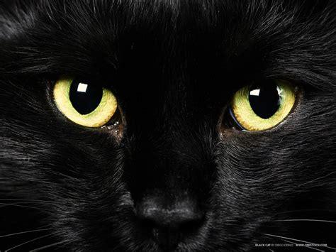 black kitty wallpaper wallpapers black cat wallpaper cave