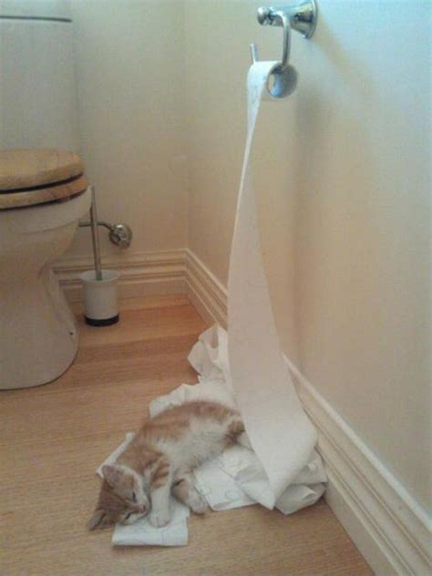 toilet paper backwards toilet paper saving tip for cat owners blogitude