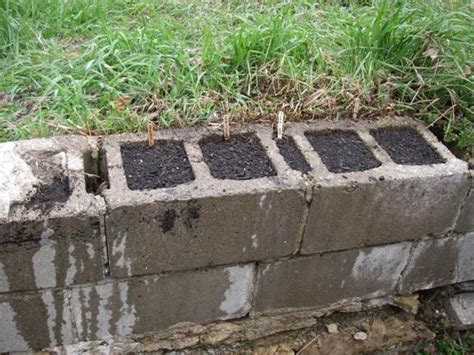 Two Green Boots We Ve Gone To Seed Concrete Blocks For Garden Walls