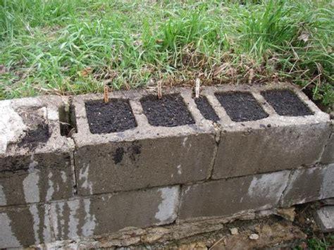 Cinder Block Garden Wall Two Green Boots Cinder Blocks As Garden Planters
