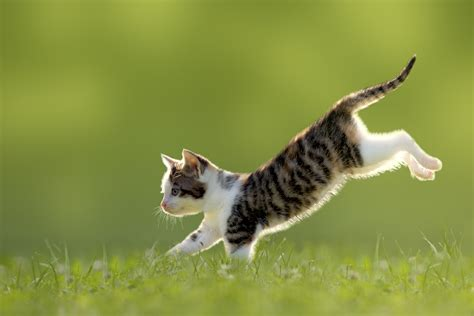 cat facts the pet parent s a to z home care encyclopedia books some top tips for the best kitten health care
