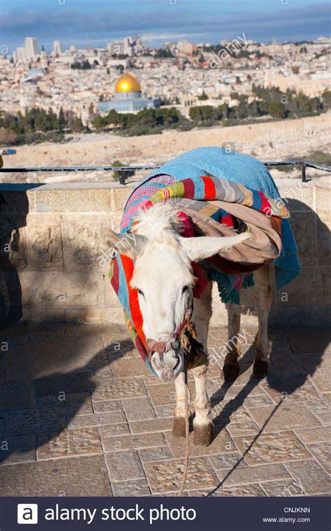 esel decken jerusalem stockfotos jerusalem bilder alamy