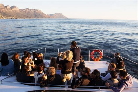 boat cruise lunch lunch and dinner cruises in cape town dinner charters