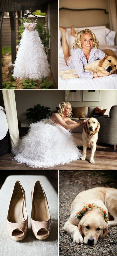 25  Best Ideas about Golden Retriever Wedding on Pinterest