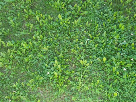 Weeds Backyard by How Do I Remove The Weeds And Lay The Lawn Gardening