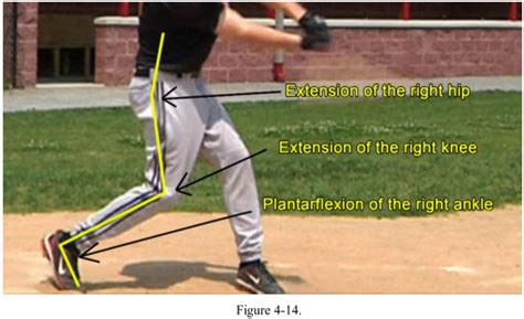 muscles used to swing a bat rotational hitting muscles external or lateral hip