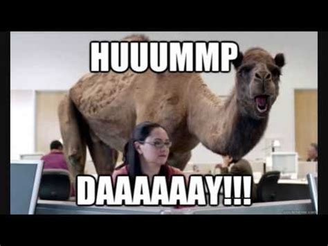 geico camel commercial hump day geico hump day remix youtube