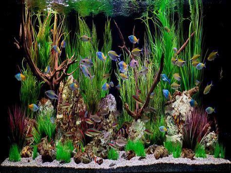 aquarium design themes decoration tropical fish aquarium decoration themes how to