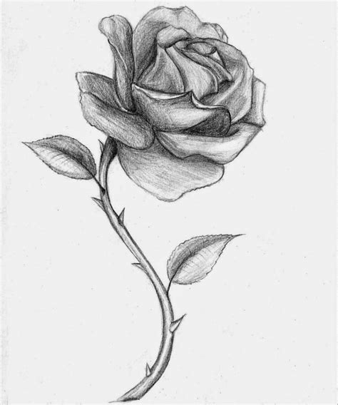 sket tattoo mawar rose images for drawing rose drawing yeskebumennewsco