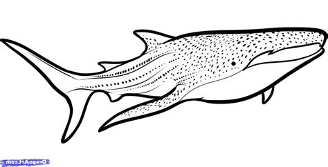 coloring page whale shark whale shark coloring page coloring page we are all
