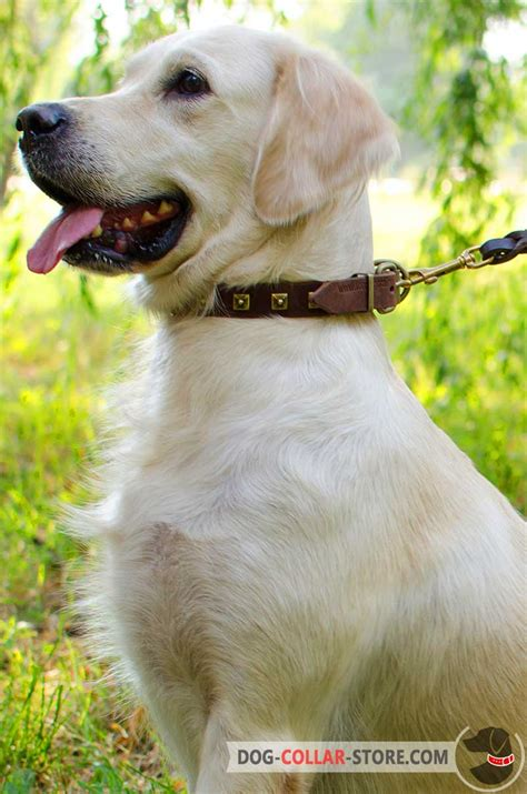 golden retriever collars get narrow original leather corso collar caterpillar style