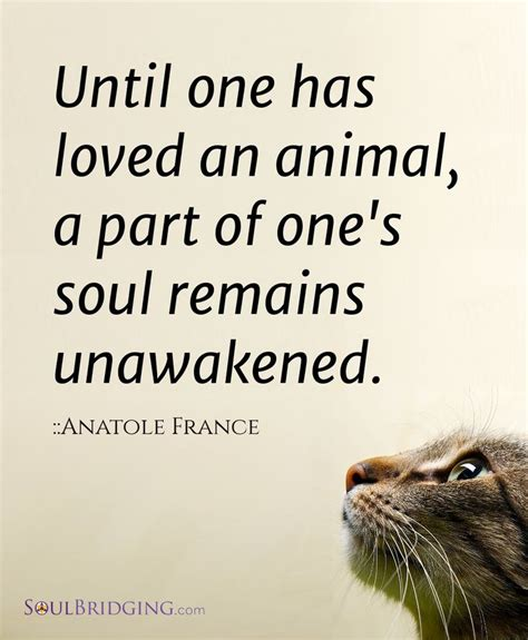 animal quotes 25 best ideas about animal quotes on