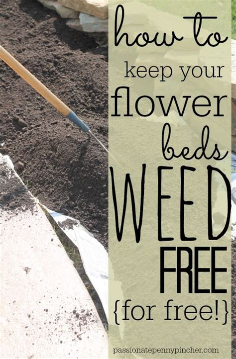 how to keep weeds out of flower beds 25 best ideas about flower beds on pinterest front