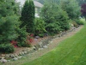 dr dans garden tips landscaping for privacy cluster