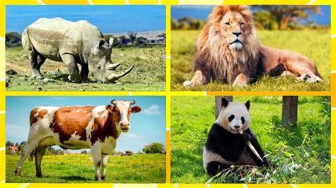 imagenes animales terrestres animales terrestres lista especie y caracter 237 sticas
