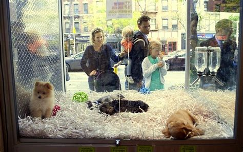 puppy pet shop boston bans pet shops from using puppy mills