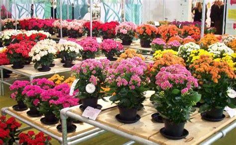 Pupuk Daun Bunga Hias cara budidaya tanaman hias sebagai lahan bisnis