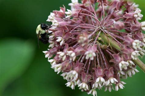 fiore perenne foto gratis insetti piante perenne pianta fiore fiore