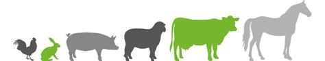 mangimi e alimenti mangimi per animali meridiana agri alimenti zootecnici