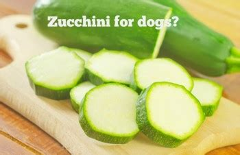 zucchini for dogs food slimdoggy