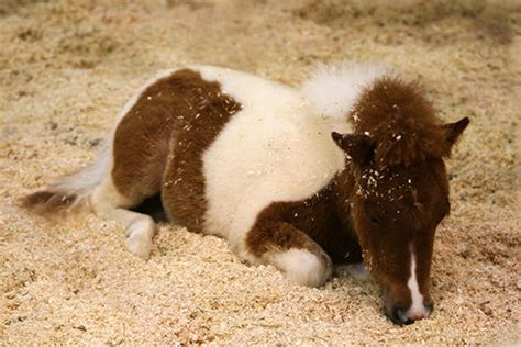 animal bedding animal bedding