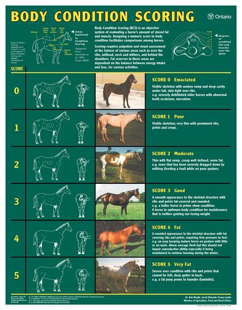 condition score livestock products catalogue