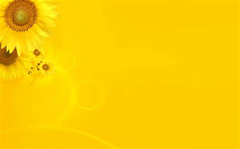 wallpaper background yellow 30 hd yellow wallpapers