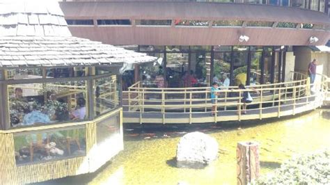 pagoda hotel buffet koi fish in the pond around the restaurant picture of pagoda floating restaurant honolulu