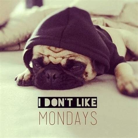 monday pug i don t like mondays humor