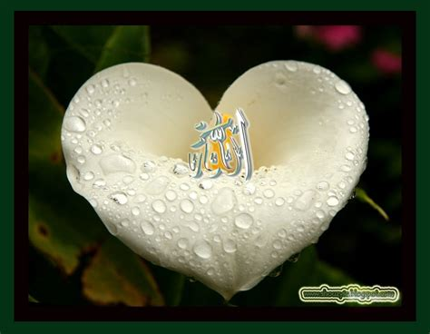 Siapa Sih Allah Ya yang mencintai allah dan yang dicintai allah menjadi