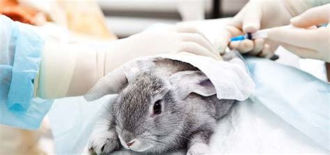 test animali end animal testing
